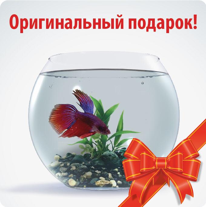 поздравление на свадьбу с подарком рыбок один удивительный яркий